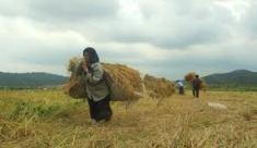 کشاورزان زن با داشتن کاری طاقت فرسا، بیمه نیستند